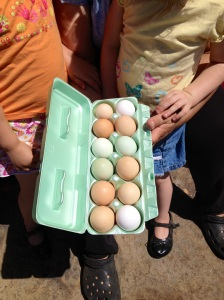 Free Range or Cage free Chicken eggs in Tulsa